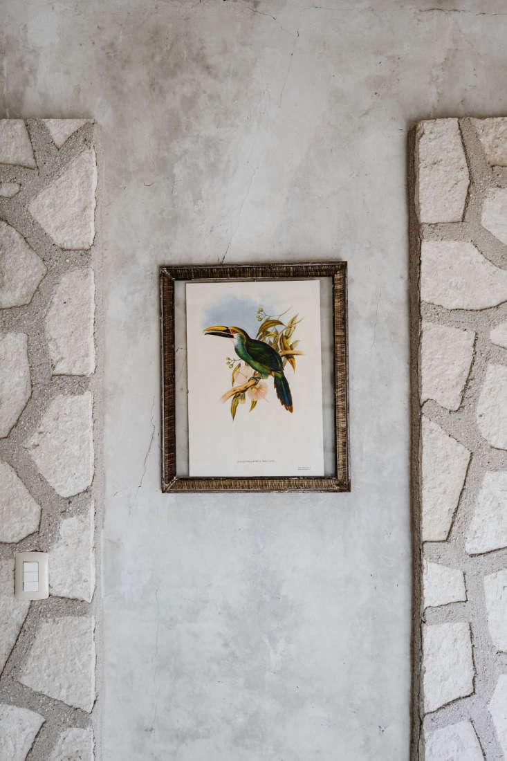 coqui coqui coba bird print, photo by cerruti draim 14