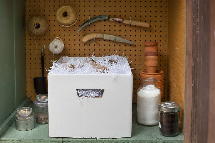 Michelle deconstructs how to preserve dahlia bulbs in winter (and gives us a peek inside her toolshed) inDIY: How to Store Dahlia Tubers in Winter.