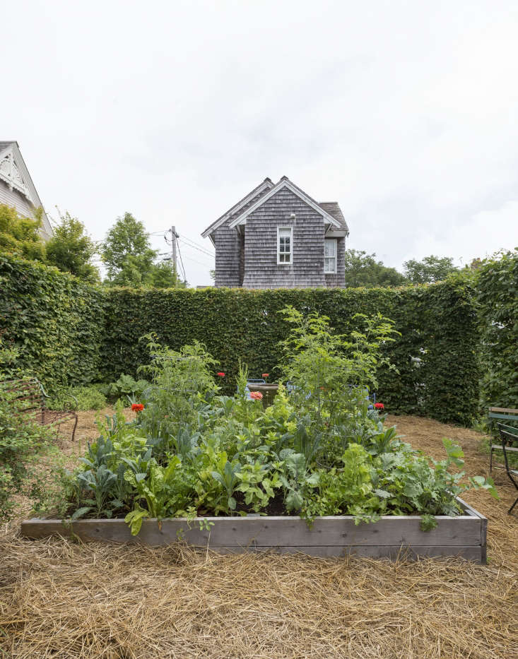 Trending on Gardenista Holiday Houseplants portrait 3_20