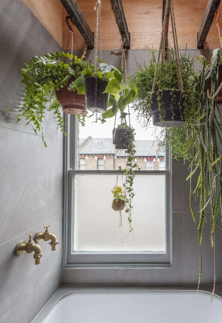 """Ferns, succulents, and other moisture-loving plants hang from the existing ceiling joists in a bathroom designed by Simon Astridge. Explains Astridge, """"The idea was to bring the outdoors in and make the space feel relaxing."""" FromSky's the Limit: 5 Indoor Plants for Rooms with High Ceilings."""