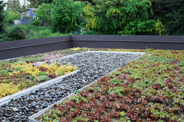 greenwood green roof 16