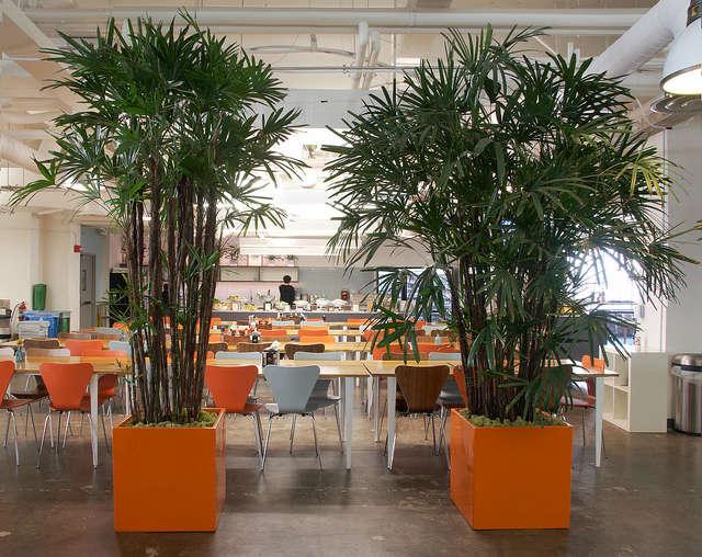 interiorscape for square: flora grubb gardens staff designer patrick lannan com 26