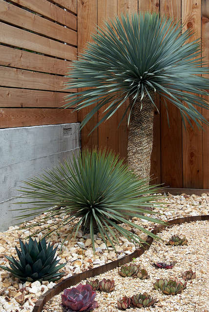 succulent jewel box garden: patrick used a stunning palette of succulents and o 28