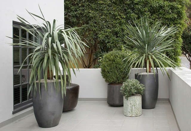 pacific heights container garden: a simple palette for the terrace portion of a 20
