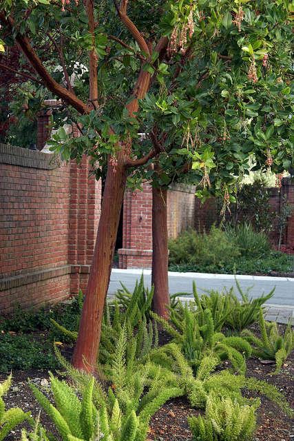 spruced &#8\2\1\1; flora grubb gardens staff designer patrick lannan refres 9