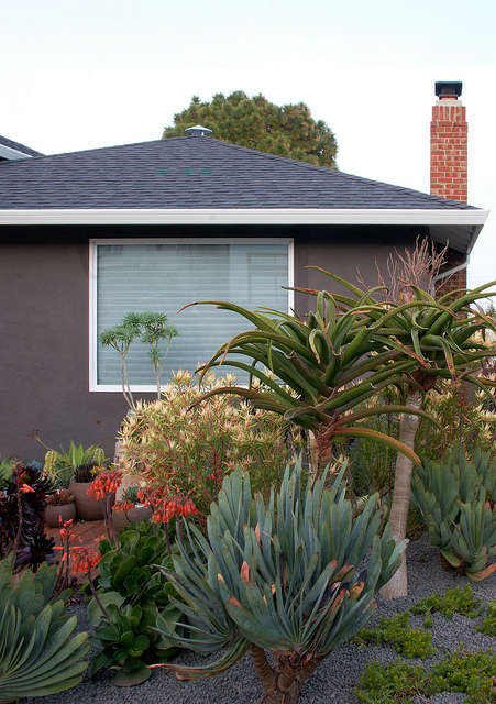 sidewalk sensation: daniel nolan collaborated with a green thumb homeowner to p 25