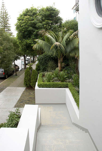 pacific heights entrance garden: daniel nolan placed a landmark pair of kentia  21