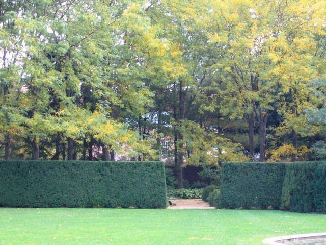 midwestern estate: yew hedges and locust trees in the fall.: allée of locust t 11