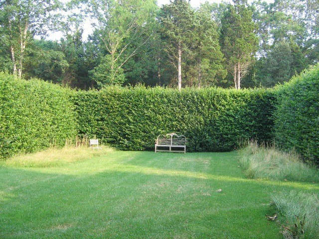 long island: hornbeam hedges.: formal, clipped hornbeam hedges provide contrast 10