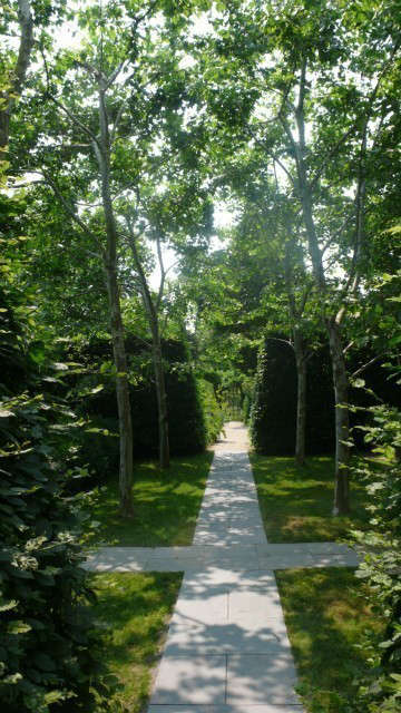 long island: allée of sycamores.: the paved path below the sycamores leads to  14