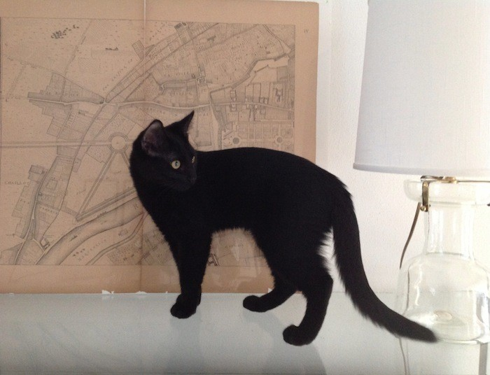 Gift Guide For the Feline Fanatic portrait 11