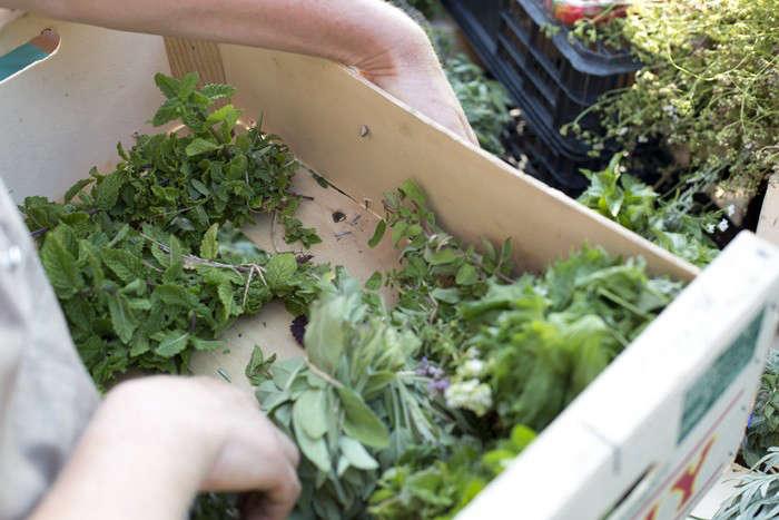 Herbs Gone Wild A French Alchemist at Market portrait 5