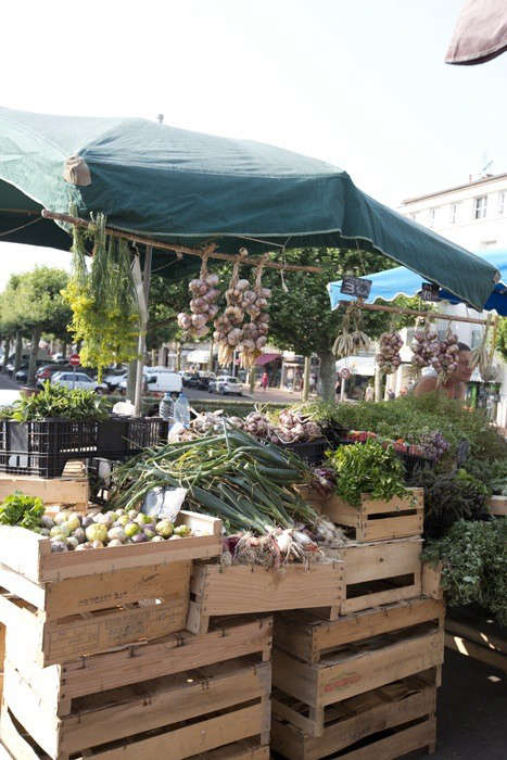 Herbs Gone Wild A French Alchemist at Market portrait 3