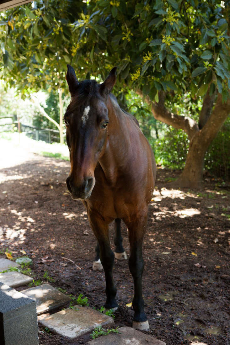 Dione stables 5