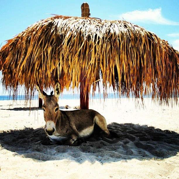 Drift Hotel San Jose Baja 18 Remodeista