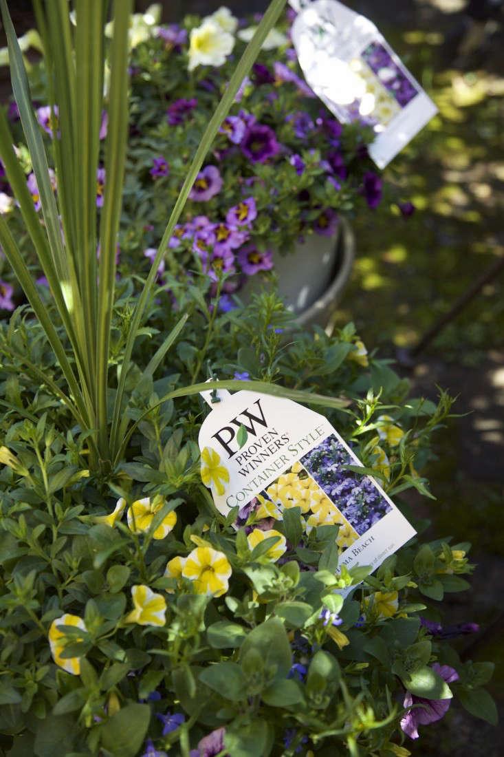 Indoor Gardening An Easy Spring Update portrait 4