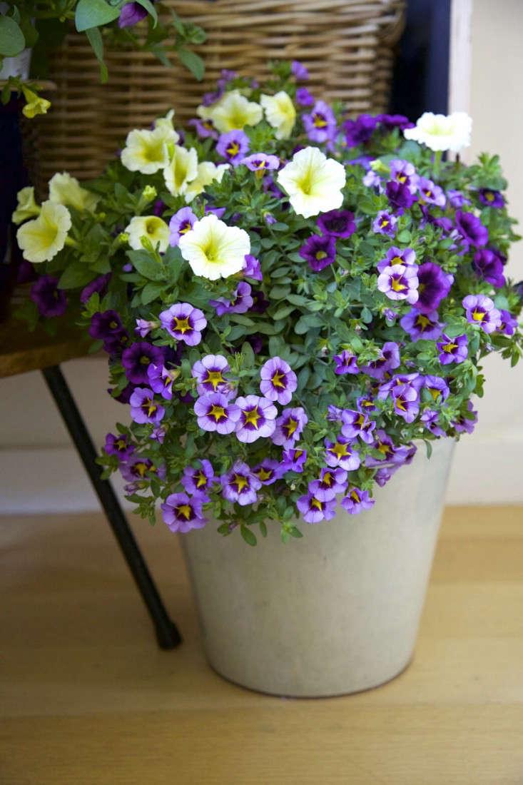 Indoor Gardening An Easy Spring Update portrait 5