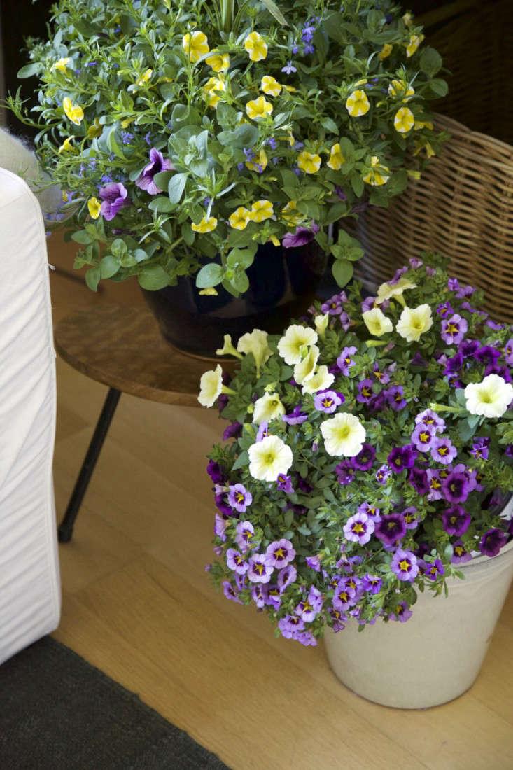 Indoor Gardening An Easy Spring Update portrait 6