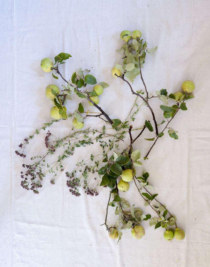 Louesa Roebuck quince flower display