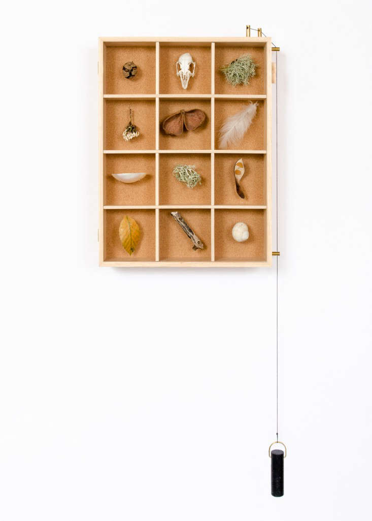 A Case for Display Ruperts Curiosities Cabinet portrait 3