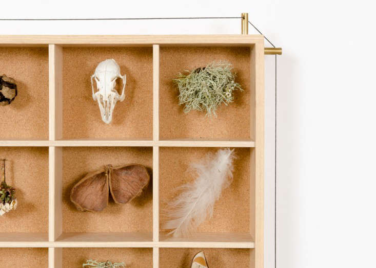 A Case for Display Ruperts Curiosities Cabinet portrait 4