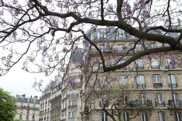 spring is arriving in paris; follow alexa at remodelista on instagram to see wh 10
