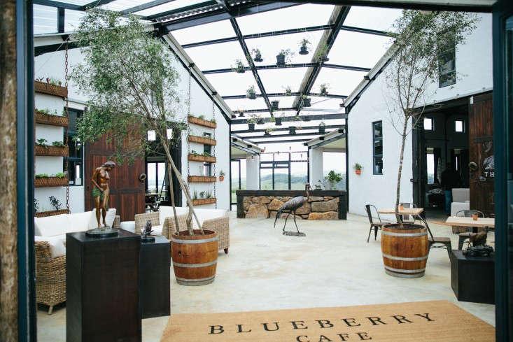 blueberry cafe samantha maber entrance gardenista
