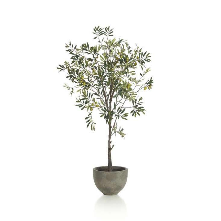 Design Sleuth A LowMaintenance Olive Branch Arrangement portrait 7
