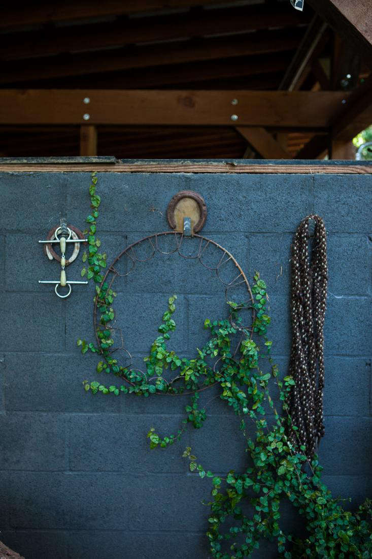 dione horse stable black wall