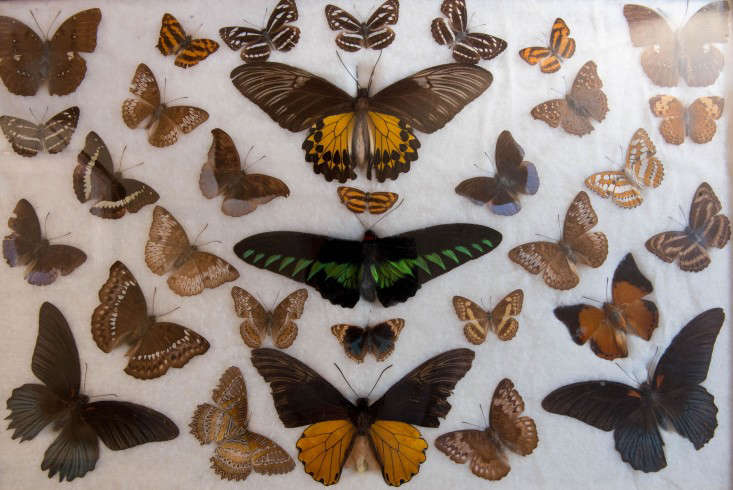 durslade farmhouse butterflies remodelista