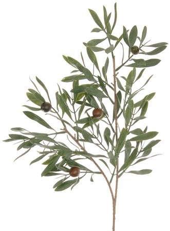 Design Sleuth A LowMaintenance Olive Branch Arrangement portrait 6