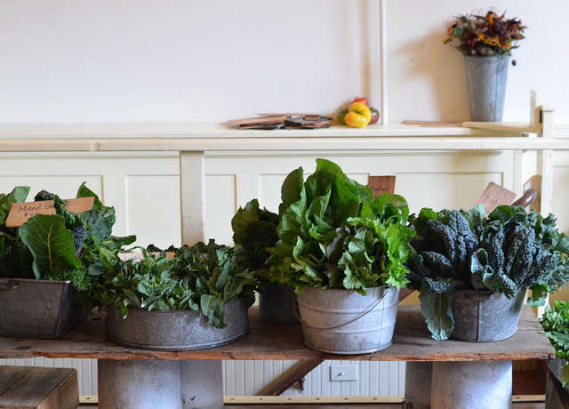edible gardens lettuce 0