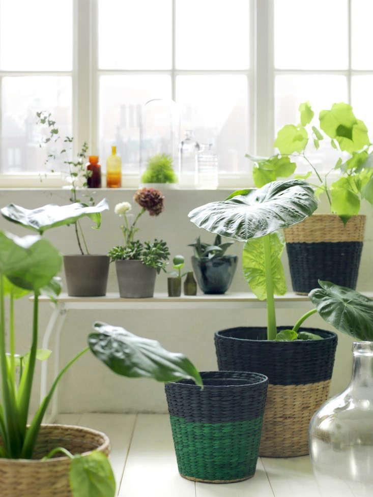 ikea nipprig woven furniture planter baskets gardenista.