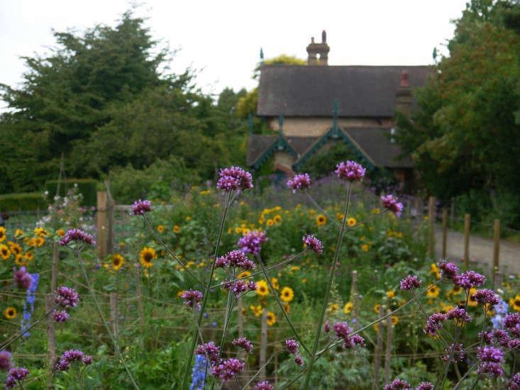 larkspur english cottage garden gardenista 0