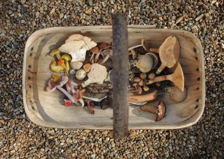 mushroom trug 2