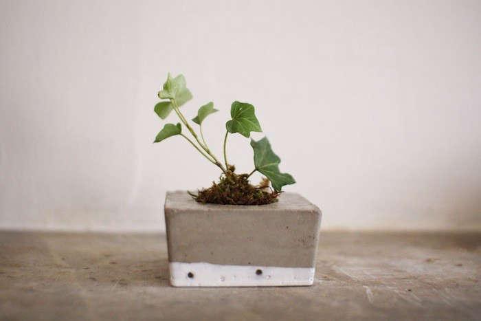 tasi masi concrete square planter gardenista