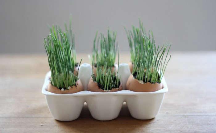 wheat grass eggs erin boyle gardenista