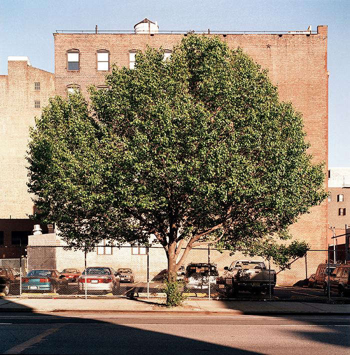 Required Reading New York City of Trees by Benjamin Swett portrait 9