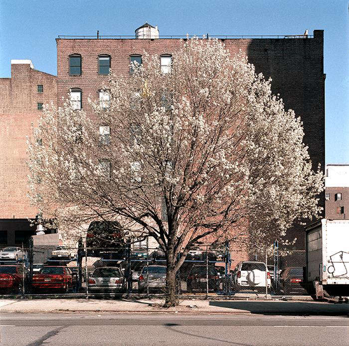 Required Reading New York City of Trees by Benjamin Swett portrait 12