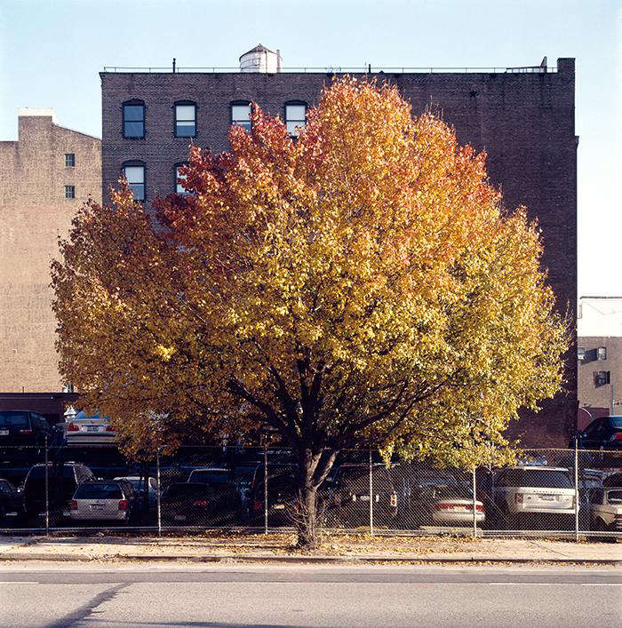 Required Reading New York City of Trees by Benjamin Swett portrait 10