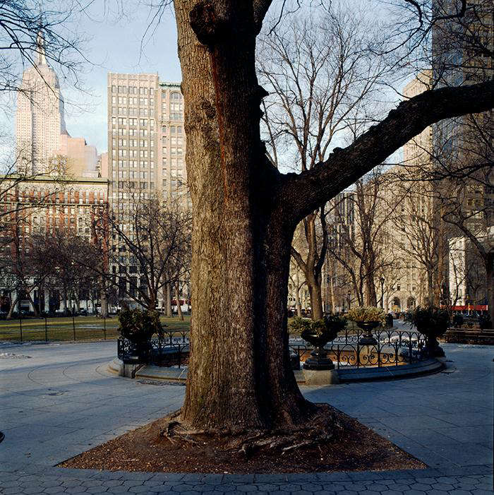 Required Reading New York City of Trees by Benjamin Swett portrait 7