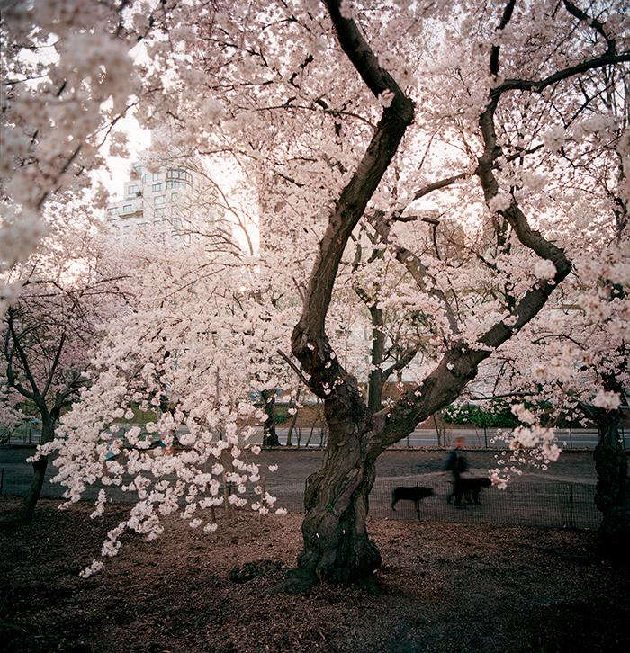Required Reading New York City of Trees by Benjamin Swett portrait 4