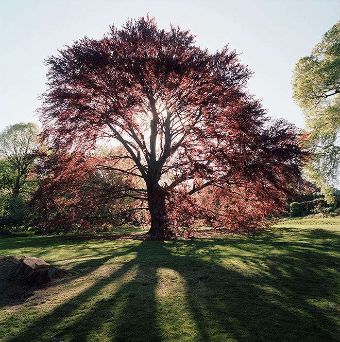 Required Reading New York City of Trees by Benjamin Swett portrait 14
