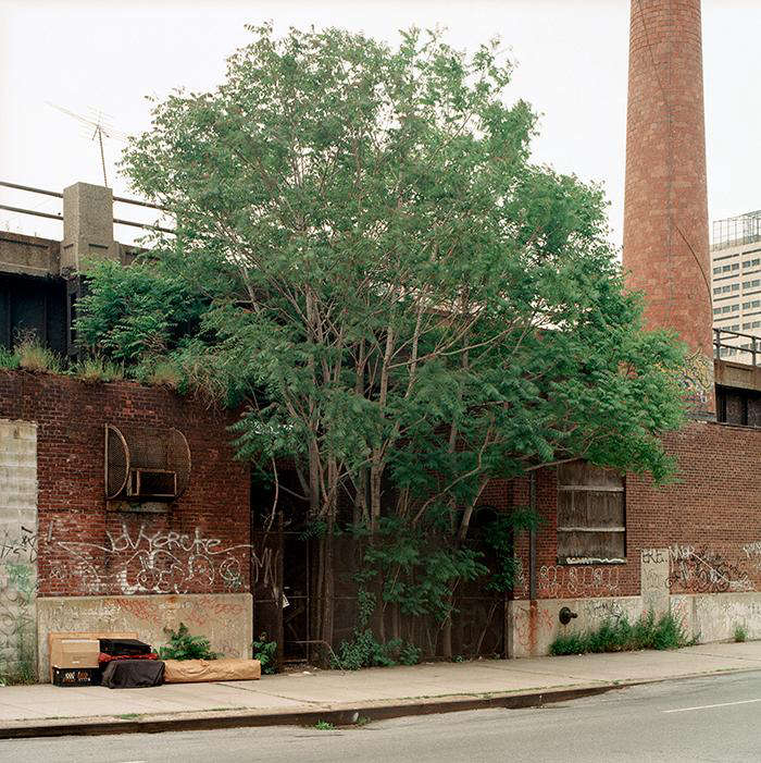 Required Reading New York City of Trees by Benjamin Swett portrait 5