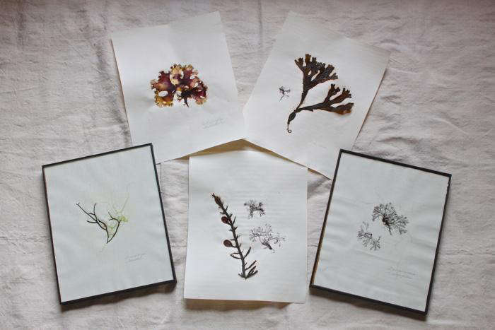 DIY  20  seaweed  20  prints  20  finished  20  5
