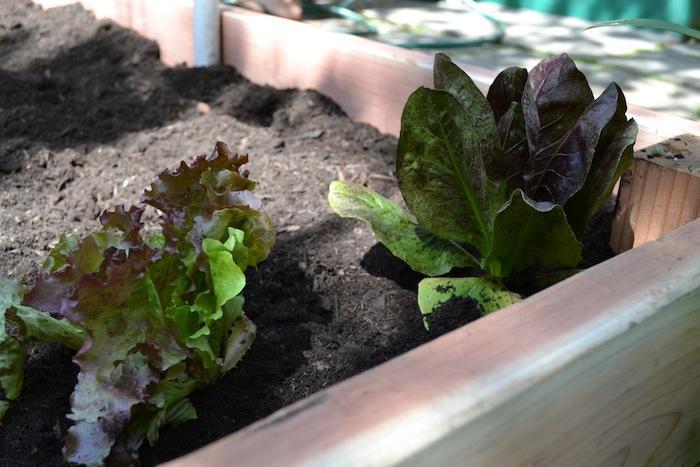 Kitchen garden Stacey Lindsay