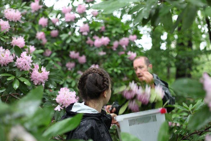 Uli  20  Lorimer  20  BBG  20  foraging  20  for  20  native  20  floral  20  arrangements
