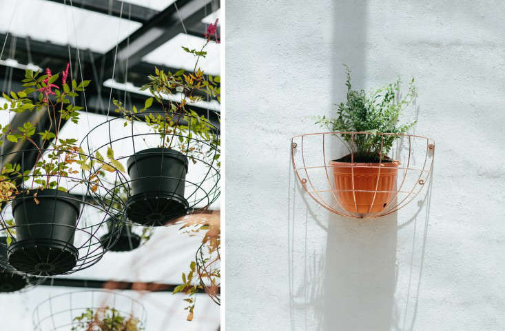 blueberry cafe hanging and wall planters
