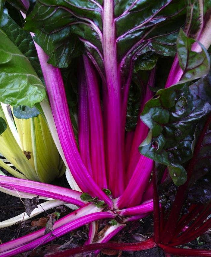 DIY Simple Tips for Growing Your Own Vegetable Garden portrait 2