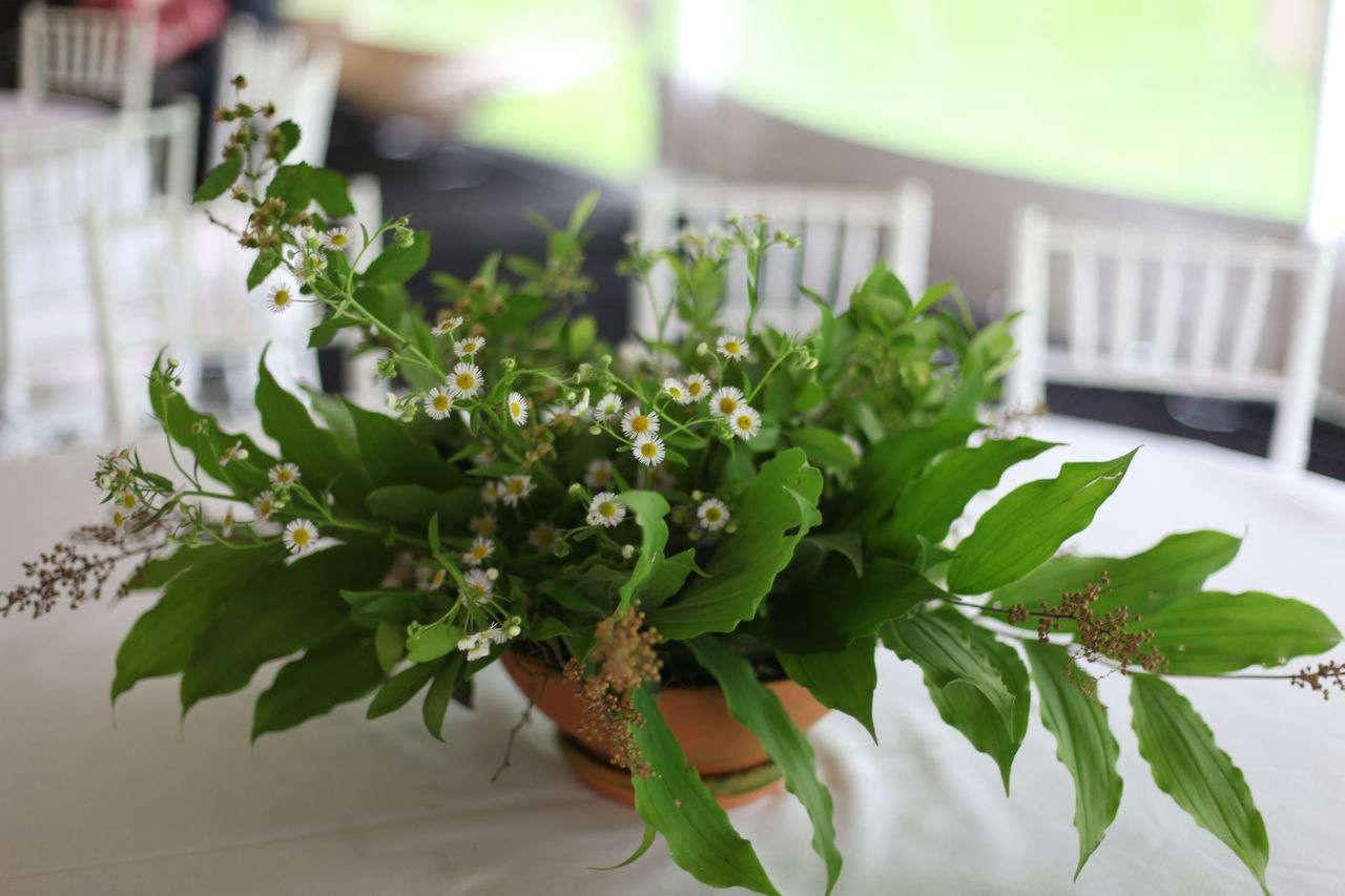 daisy  20  arrangement